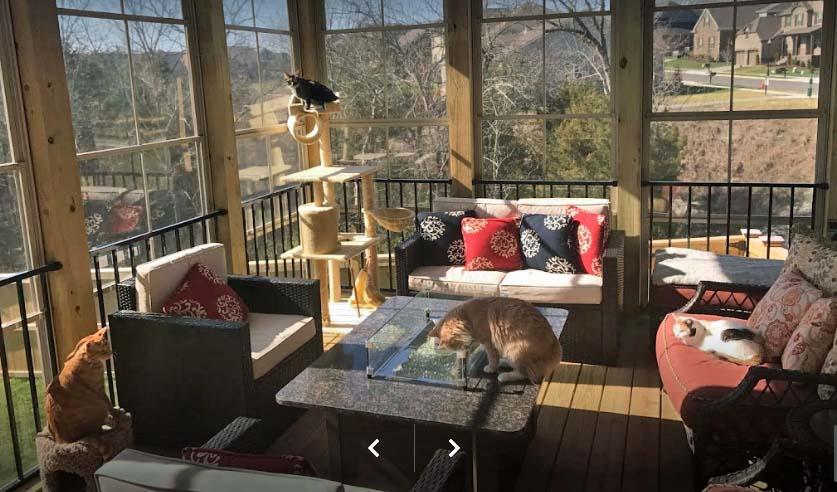 cats in sunroom