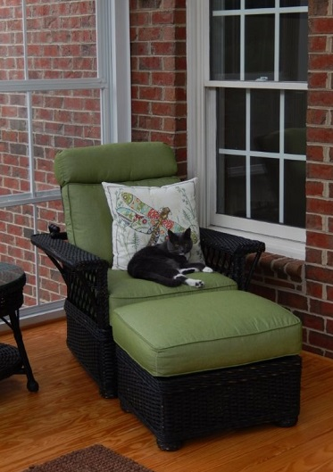 cat on furniture on deck