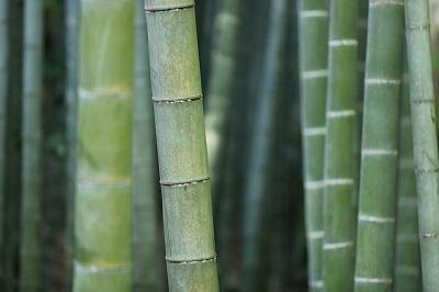 bamboo shoots up close