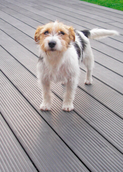 Dog on a deck